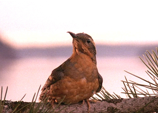 The bird from the opening credits of 'Twin Peaks.' It looks real and has no bug in its mouth.